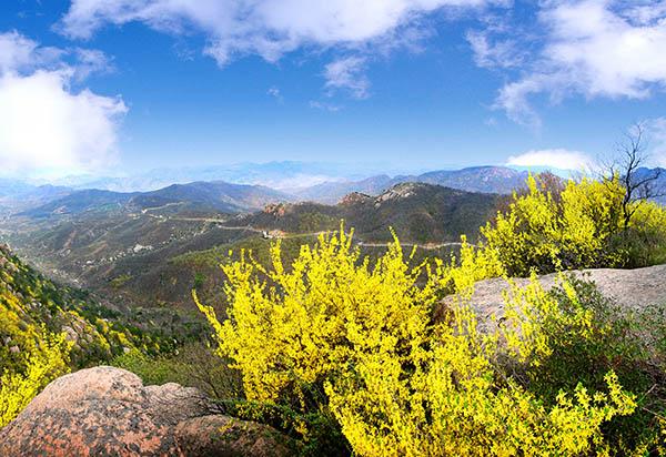 鲁山之春 - 鲁山国家森林公园官方网站|淄博鲁山国家